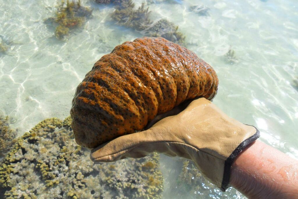 Exploring the fauna of the Great Barrier Reef